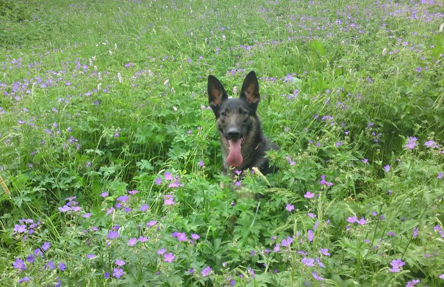 Hund entlaufen - Hundeschule Jehnes