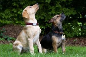 Hundeschule Jehnes