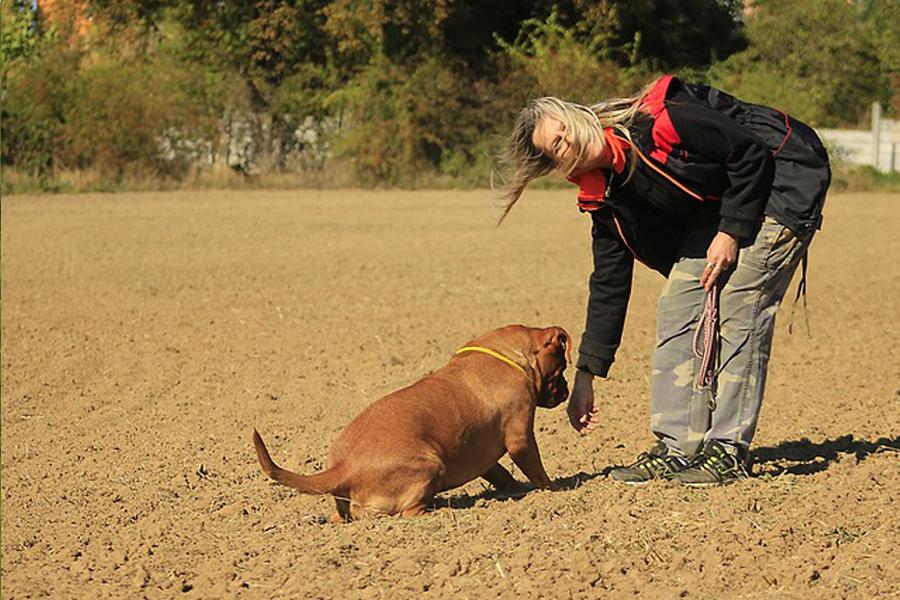 Fährtenkurs Hundetraining